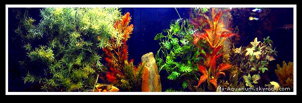 ■ Mon Aquarium _La description de mon aquarium.