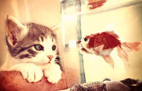 ■ Les News _Toute l'actualité de mon aquarium est ici.