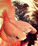 Photo de My-Aquarium