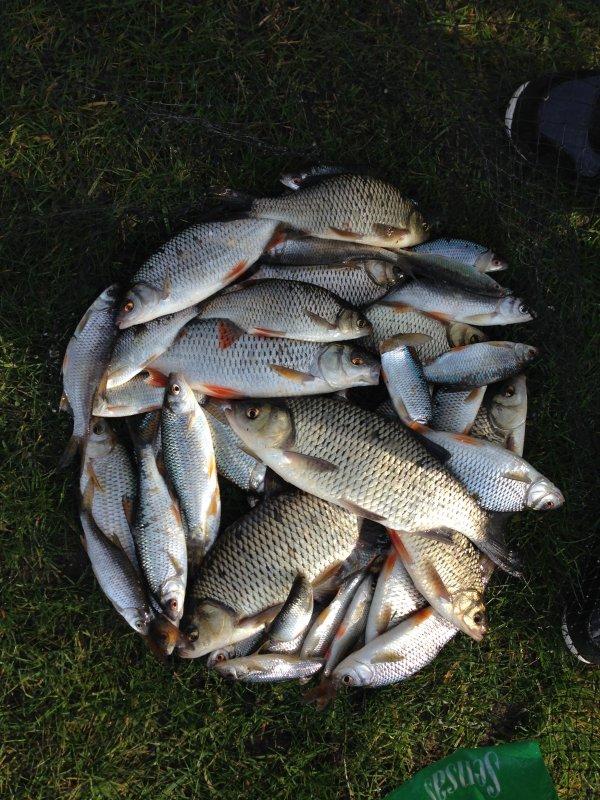 Première sortie de pêche au coup 2015