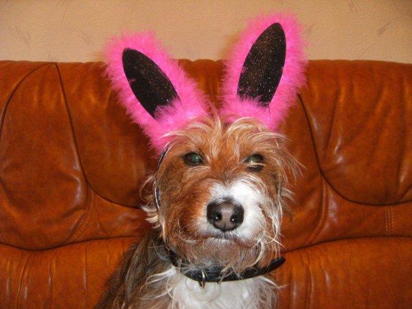 Copain le chien de ma s½ur, déguisé pour les fêtes de pâque.
