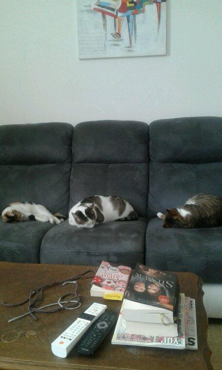 Nos trois mousquetaires