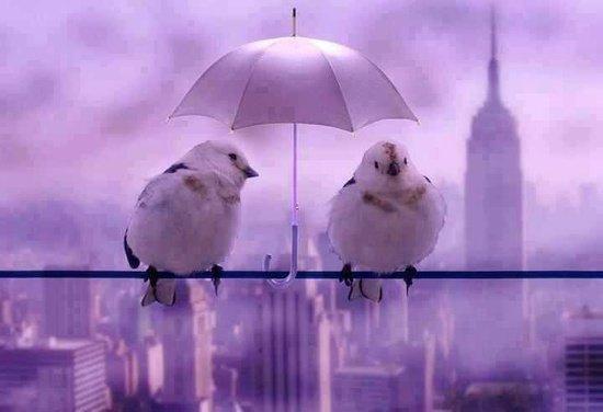 un lundi sous la pluie