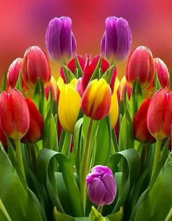 excellent mercredi fleuri