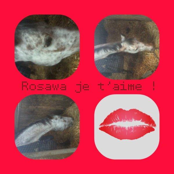 ROSAWA