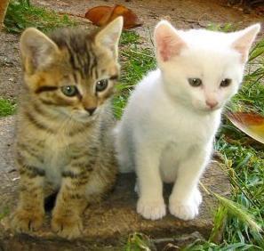 Deux petits chats mignons tout plein moi et mes d lires - Image de petit chat ...