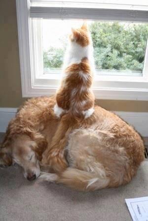 """comme chien et chat """"""""OUPS"""