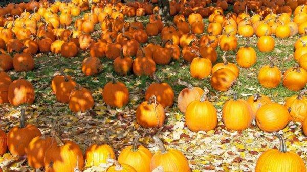 Les prévisions de Météo France pour ce Vendredi 25 octobre
