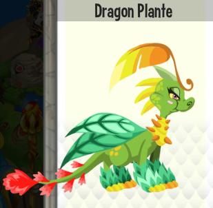 Dragon plante