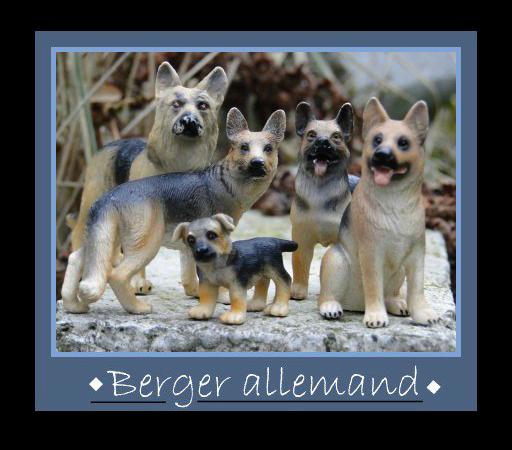 ● Les bergers allemands ●