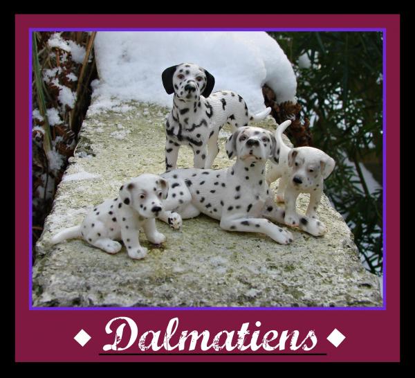 ♣ Les dalmatiens ♣