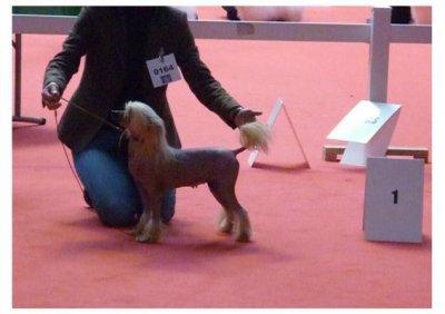 Nationale d'élevage du CCCE 2012