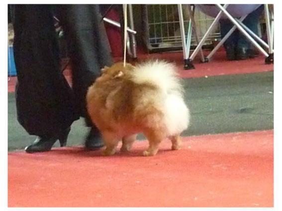 Exposition Canine de Montluçon 2012