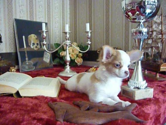 Grace Kelly du Diamant d'Or