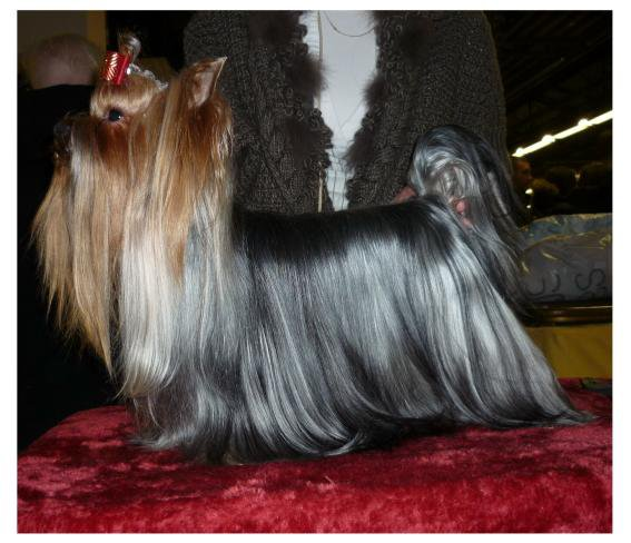 Paris Dog Show 2013
