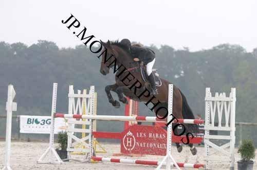 Présentation de mes chevaux