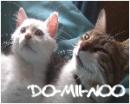 Photo de x-cats-story