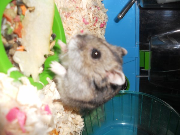 plume mon hamster qui et morte le 12/01/12