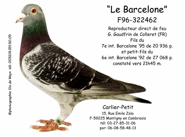 1er As Pigeon 2017 France et 1er As Pigeon Européen 2017