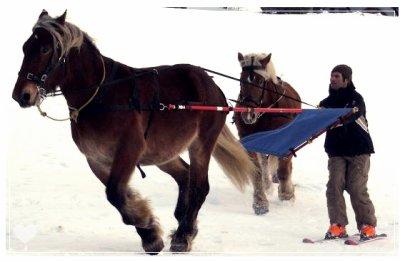 Un sport d'hiver -> ski joering