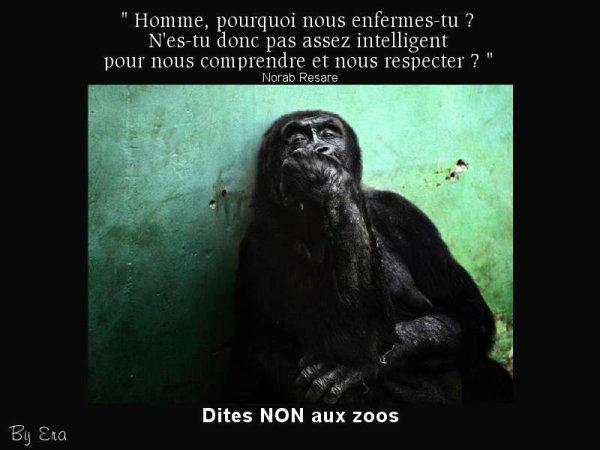 Un zoo.. Une prison