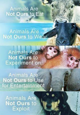 Animals are not ours...