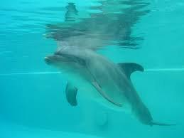Sam le dauphin qui ne voulait pas être captif