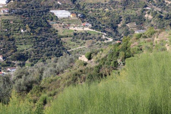 Vallebona (IM) - Località Fuberta