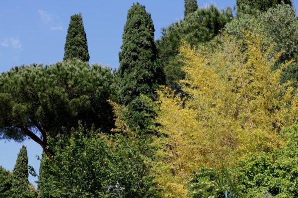 Bordighera (IM) - in Via Galileo Galilei