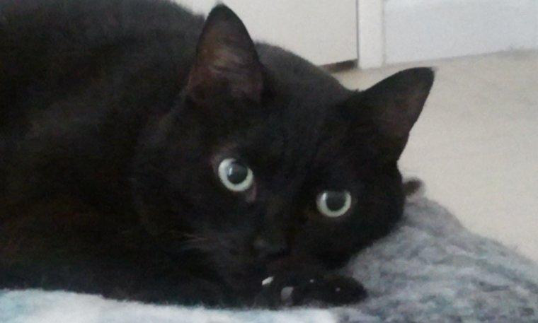 plantes toxiques et symt mes apr s ingestion pour le chat le titoudou blog. Black Bedroom Furniture Sets. Home Design Ideas