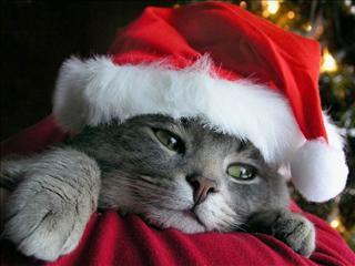 Noël =)