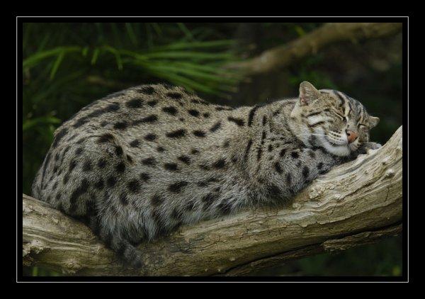 Le Chat Pécheur!!