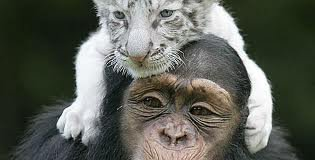 LA Fraternité ENTRE LES DIFFÉRENCE Variété DE l 'animal