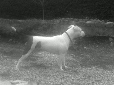 voici ma chiene la trouver vous belle?????