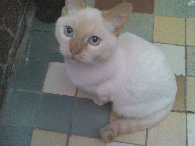 le chat de ma maman