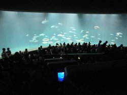12 Septembre 2010 - Tokyo sea life park