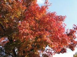 08 et 09 Novembre - Nikko