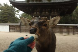 21 au 23 Février - Osaka, Nara, Kobe