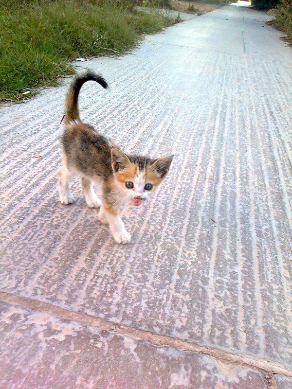 Mon Chat héhé i L'est Méchant