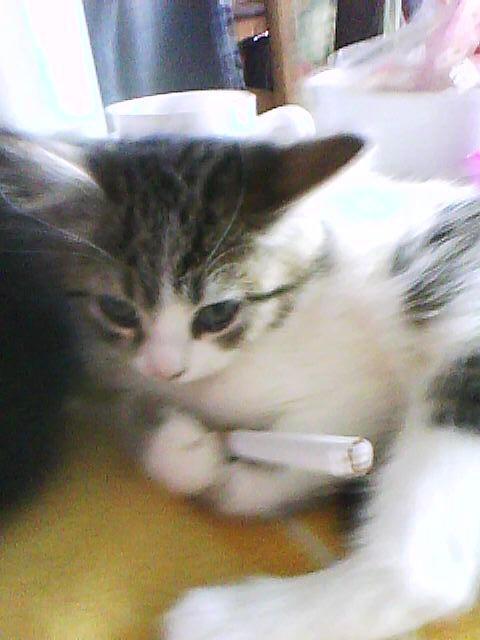 Voila notre chat Bigoudi, avec un filtre a cigarette ^^