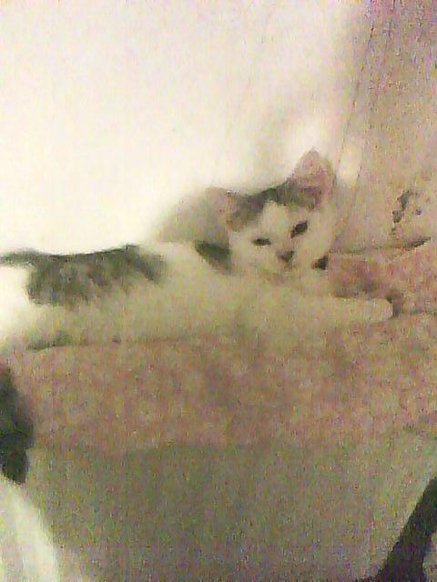 Voila notre chat Bigoudi, allonger sur le radiateur