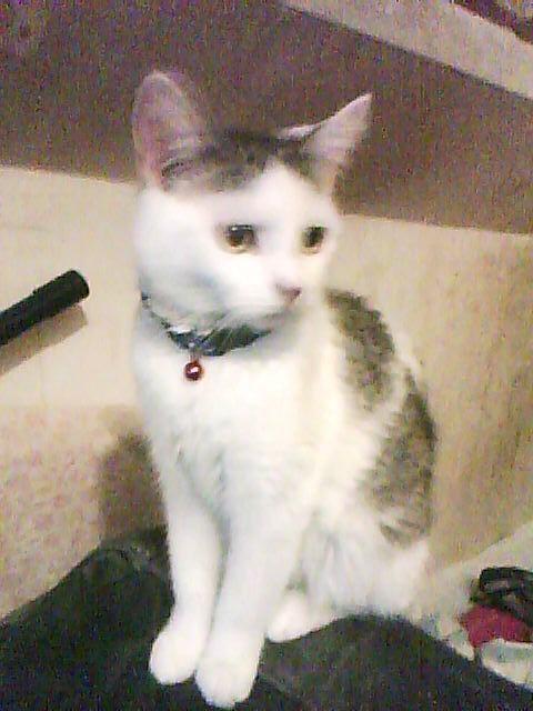 Voila notre chat Bigoudi, qui est assit sur le dossier du fotouille