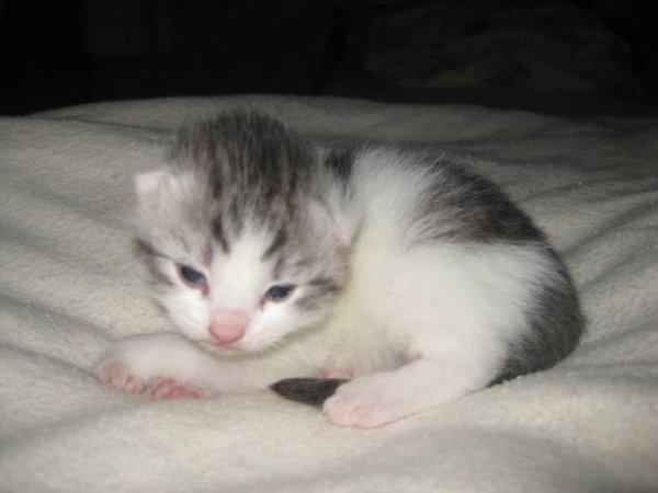 Voila notre chat Bigoudi, quand elle étais bébé