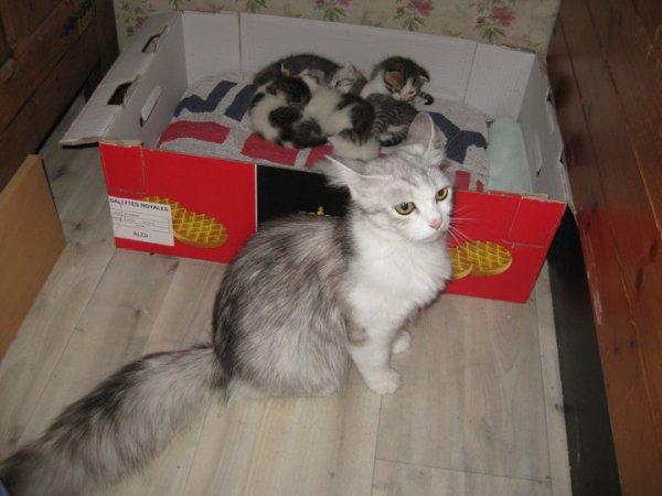 Voila notre chat Bigoudi quand elle étais bébé avec sa maman et ses frère et soeur