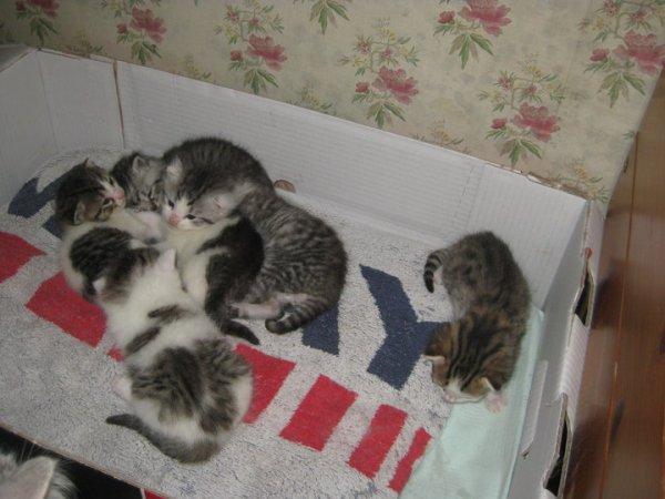 Voila notre chat Bigoudi quand elle étais bébé avec  ses frère et soeur