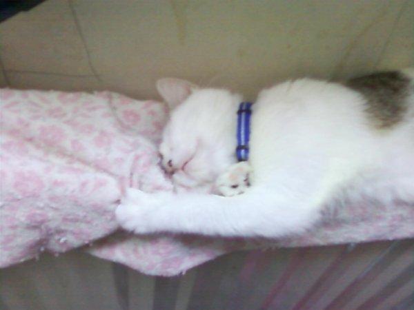 Notre chat Bigoudi qui fait dodo sur la radiateur