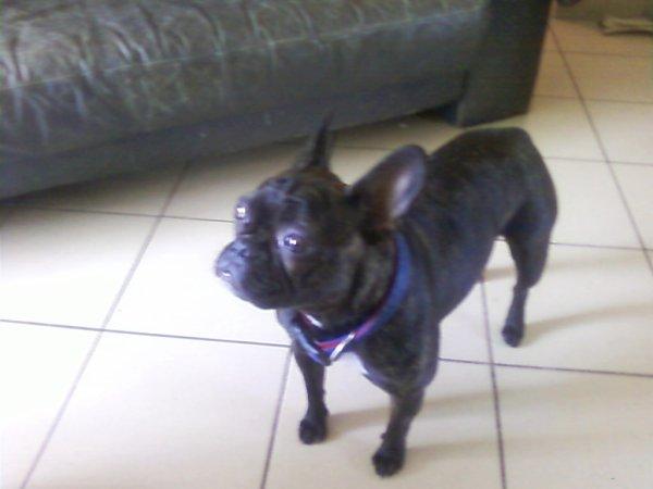 Notre chien Poupette qui est dans le salon
