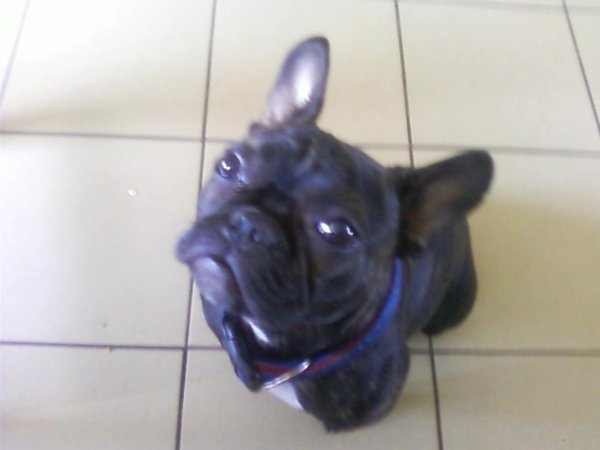 Notre chien Poupette qui prend la pose