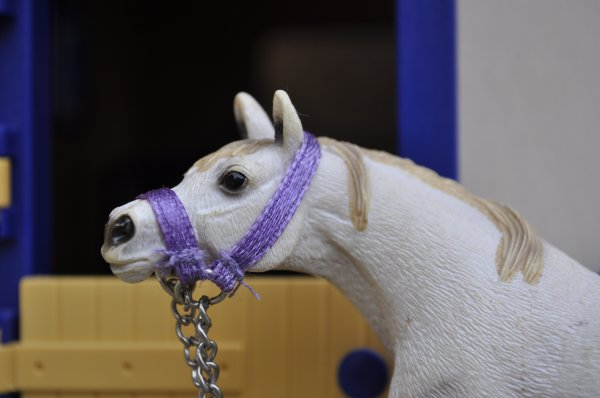 Présentation chevaux