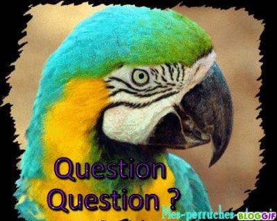 ~Question Question ?~
